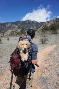 Voyage avec chien