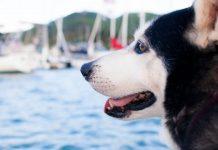 Voyage avec son chien en bateau
