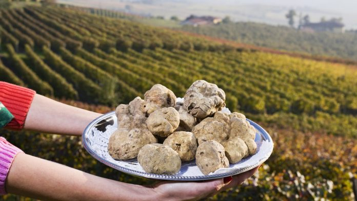 Foire de la truffe blanche à Alba